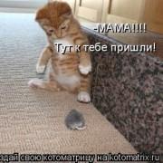 http://thumbnails16.imagebam.com/10262/606829102617339.jpg