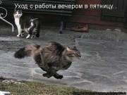 http://thumbnails16.imagebam.com/10262/b9de9d102617354.jpg