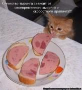 http://thumbnails16.imagebam.com/10262/c5c31d102617349.jpg