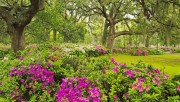 Flowers and Gardens HQ wallpapers Collection 1 38f3cc108223136