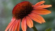 Flowers and Gardens HQ wallpapers Collection 1 5a6ec9108224461
