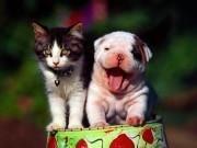 Cuteeeeee Animals wallpapers Bf2a6f108284664