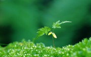 Green Plants Birth HD Wallpapers 2d83cb108974001