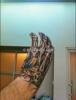 [sondage] Que pensez vous du tatoo à la main de Bill ? 451a64173740858